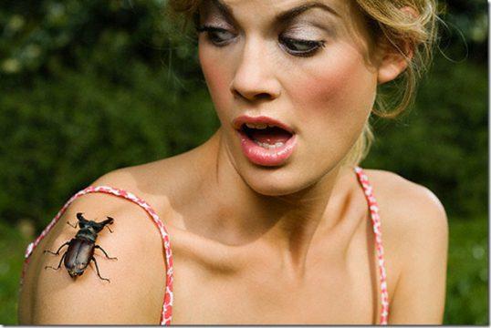 Боязнь насекомых