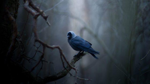 Боязнь птиц