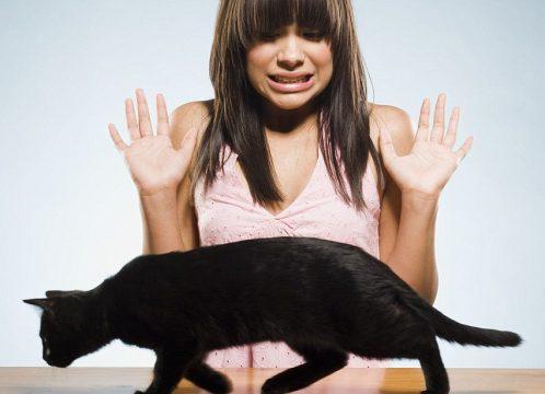 Боязнь кошек