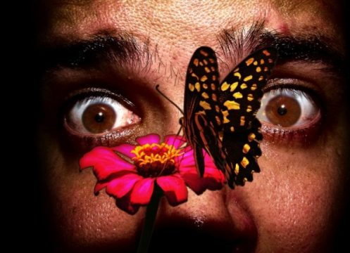 Боязнь бабочек